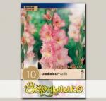 Гладиолус крупноцветковый PRISCILLA, 10 шт. NEW