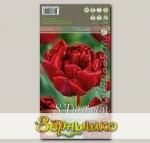 Тюльпан махровый ранний RED BABY DOLL, 8 шт.