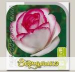 Роза чайно-гибридная ДОЛЬЧЕ ВИТА, 1 шт.