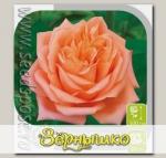 Роза чайно-гибридная СЕДУКЦИОН, 1 шт.