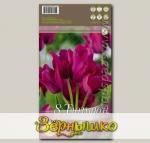 Тюльпан многоцветковый NIIGHT CLUB, 8 шт.