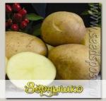 Севок картофеля Фермер, 500 г