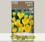 Крокус крупноцветковый BIG YELLOW, 12 шт.
