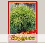 Кипарисовик Горохоплодный «Filifera Sungold», 0,2 г