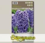 Гиацинт садовый REMBRANDT, 5 шт.
