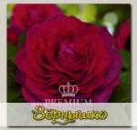 Роза Премиум АМПИР, 1 шт. NEW