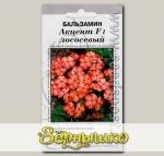 Бальзамин Акцент Лососевый, 10 шт. Профессиональные семена