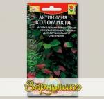 Актинидия Коломикта, 10 шт.