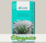 Пеннисетум Лисохвостовый, 10 шт.