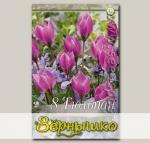 Тюльпан ботанический HELENE, 8 шт.
