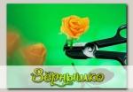 Ножницы для роз с захватом S10