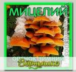 Мицелий зерновой Опенок Зимний, 150 мл