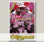 Пеларгония плющелистная ампельная Зоммертайм F1, Смесь, 5 шт. Platinum