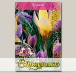 Крокус ботанический ADVANCE, 10 шт.