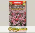 Герань плющелистная Каскад цвета, Смесь, 3 шт.