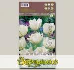 Тюльпан простой ранний EXOTIC PURISSIMA, 8 шт.