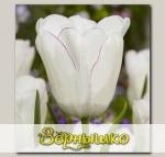 Тюльпан Триумф DIAMOND JUBILEE, 5 шт. NEW