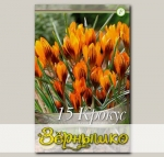 Крокус ботанический ORANGE MONARH, 15 шт. NEW