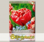 Тюльпан махровый поздний CABELLA, 8 шт. NEW
