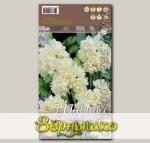 Нарцисс многоцветковый (Танацета) ERLICHEER, 3 шт.
