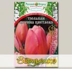 Тюльпан простой поздний МАРИНА ЦВЕТАЕВА, 5 шт. Эксклюзив (Российские гиганты)
