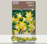 Нарцисс ботанический PIPIT, 5 шт.