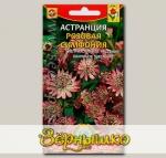 Астранция Розовая симфония, 4 шт.
