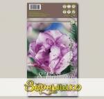 Тюльпан махровый поздний DOUBLE SHIRLEY, 8 шт.