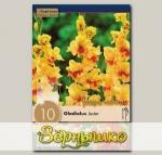 Гладиолус крупноцветковый JESTER, 10 шт. NEW