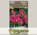 Тюльпан многоцветковый TORONTO, 8 шт.