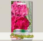 Пеларгония зональная Династия Фиолетово-Розовая, Смесь, 5 шт.