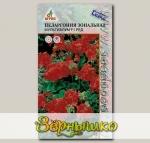 Пеларгония зональная Мультиблум Ред, 5 шт.