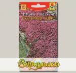 Тимьян ползучий Пурпурный ковер, 0,05 г