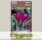 Тюльпан зеленоцветный VIOLET BIRD, 8 шт.