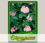 Роза Нутканская, 0,5 г (? 25 шт.)