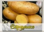 Севок картофеля Императрица, 500 г