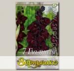 Гладиолус крупноцветковый ESPRESSO, 7 шт.