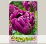 Тюльпан махровый поздний NEGRITA DOUBLE, 8 шт.