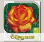 Роза Флорибунда ЦИРКУС, 1 шт.