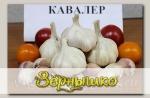 Чеснок озимый КАВАЛЕР, 5 шт.