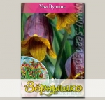 Рябчик ассирийский UVA VULPIS, 10 шт.