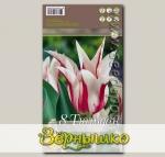 Тюльпан лилиецветный MARILUN, 8 шт.