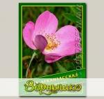 Роза Арканзасская, 0,5 г (? 22 шт.)