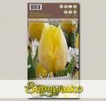Тюльпан простой ранний SUNNY PRINCE, 8 шт.