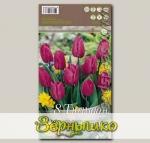 Тюльпан простой ранний PURPLE PRINCE, 8 шт.