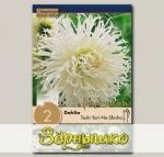 Георгин кактусовый TSUKI-YORI-NO-SHISHA, 2 шт. NEW