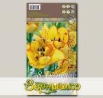 Тюльпан многоцветковый AQUILLA, 8 шт.
