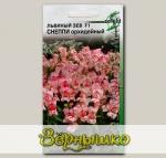Антирринум (львиный зев) низкорослый Снеппи Орхидейный F1, 20 шт. Selekt