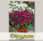 Петуния каскадная мелкоцветковая Нинья Бургунди F1, 5 шт.
