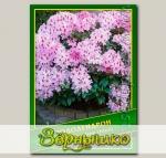 Рододендрон (Rhododendron ririeri), 0,02 г (? 40 шт.)